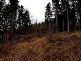 Bärenpfad (3)
