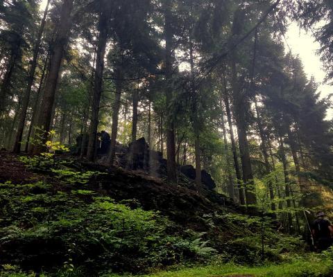 Trail Römische Weinstrasse '16 – 30k & 1000HM