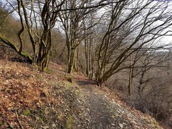 K1600_Morscheider Grenzpfad (3)