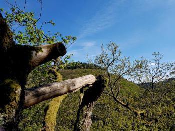 Morscheider Grenzpfad (14)