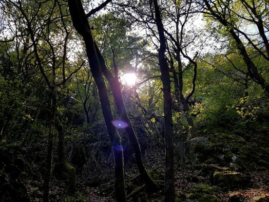 Morscheider Grenzpfad (7)