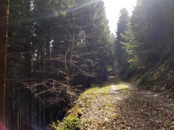 Revierguide Suedpfalz Tag 2 Inov8 Roclite305 (37)