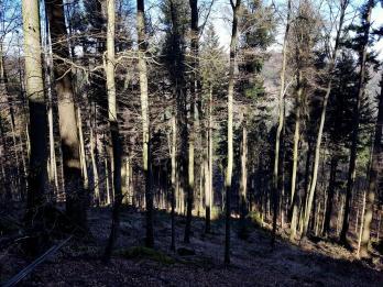Revierguide Suedpfalz Tag 2 Inov8 Roclite305 (74)