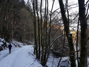 Rockenwalder Urwaldpfad (17)