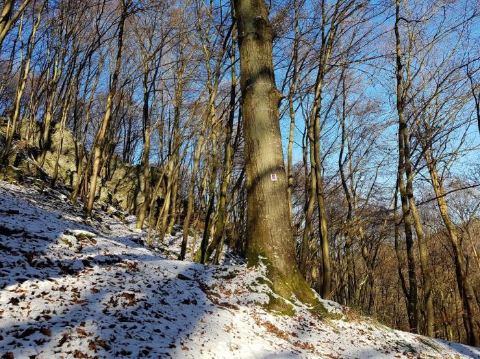 Rockenwalder Urwaldpfad (24)