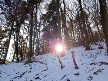 Rockenwalder Urwaldpfad (31)