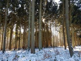 Rockenwalder Urwaldpfad (41)