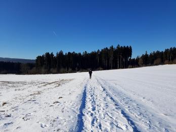 Rockenwalder Urwaldpfad (48)