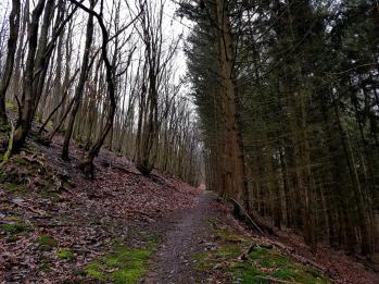 Trailrunning - Trier (10)