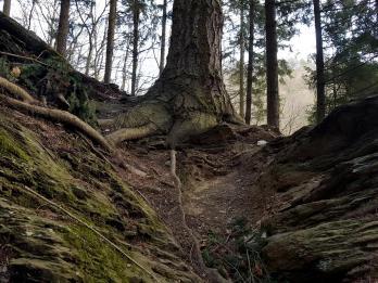 Trailrunning - Trier (21)
