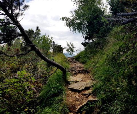 Trailrunning vs Waldlaufen