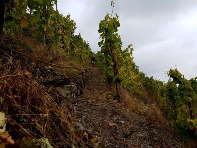 Trailrunning - Trier (33)