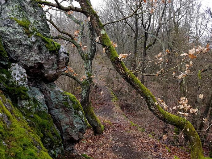 Trailrunning - Trier (4)