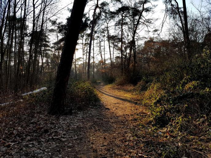 Trailrunning - Trier (8)
