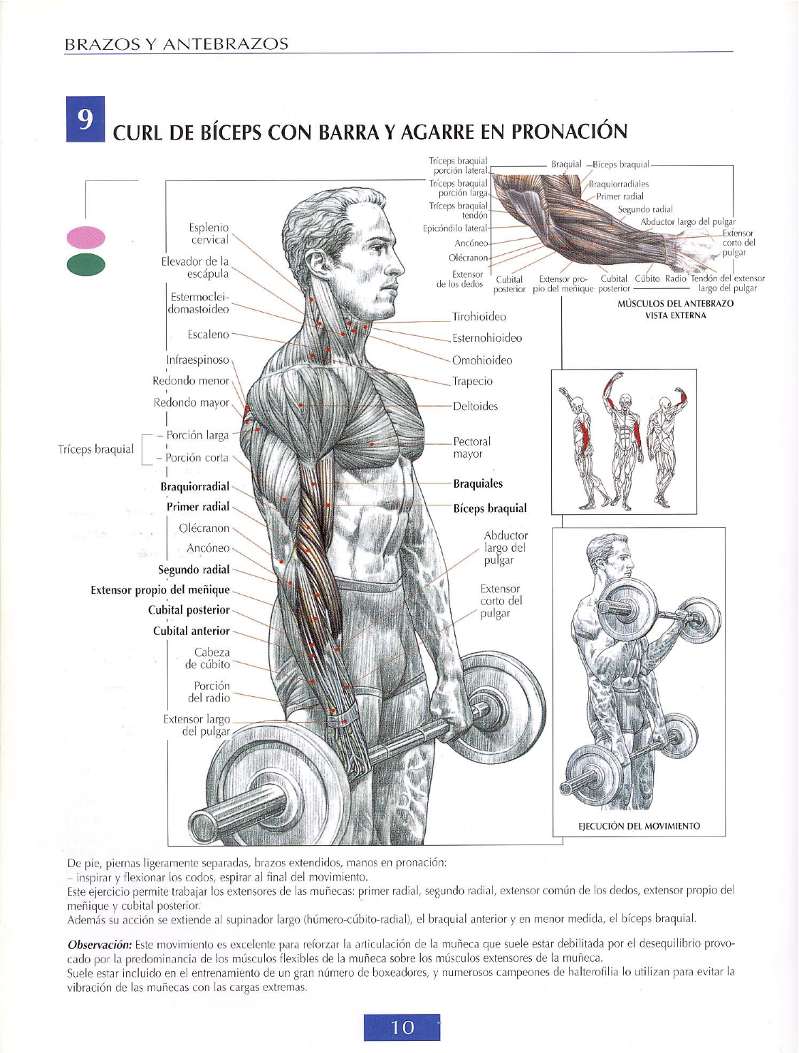 Strength Training Anatomy Frederic Delavier Images - human anatomy ...