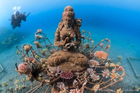 The Coral Goddess, Bio-Rock Pemuteran, Bali, Indonesia. Canon 7D, 10mm, Nautural light.