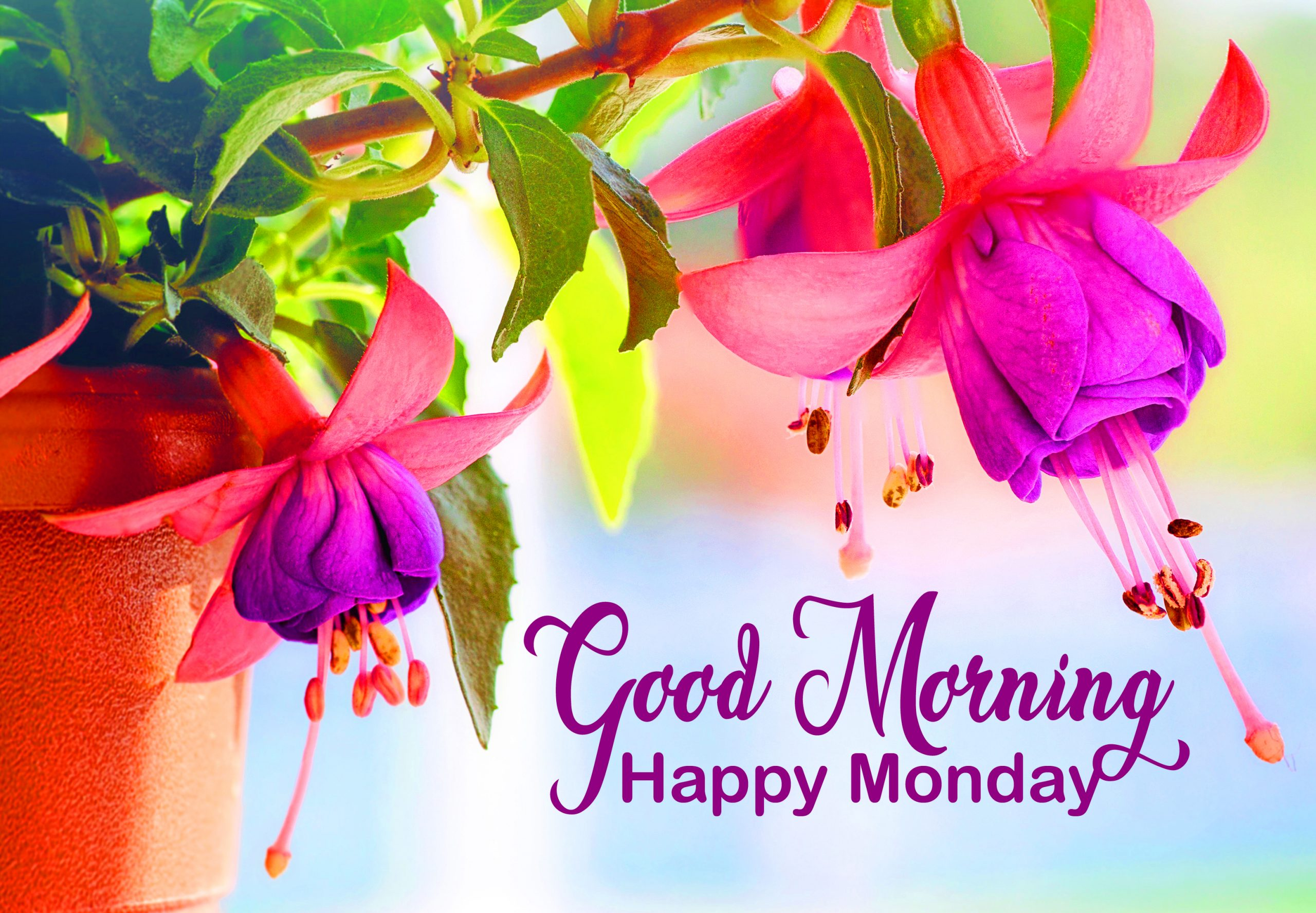Beautiful-and-Colorful-Flowers-Good-Morning-Happy-Monday-Image-scaled