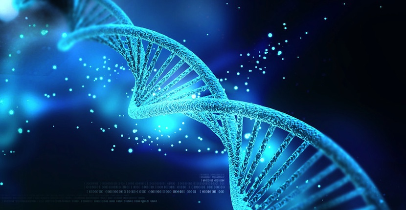 Microsoft ADN