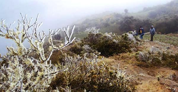 Pucará está ubicado a unos 2.500 msnm. en el municipio de Vallegrande. Hace un año (foto) la helada también hizo estragos en la zona