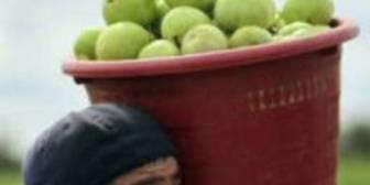 China busca comida en América