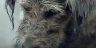 YouTube: Historia de perro bueno y malo te moverá el corazón