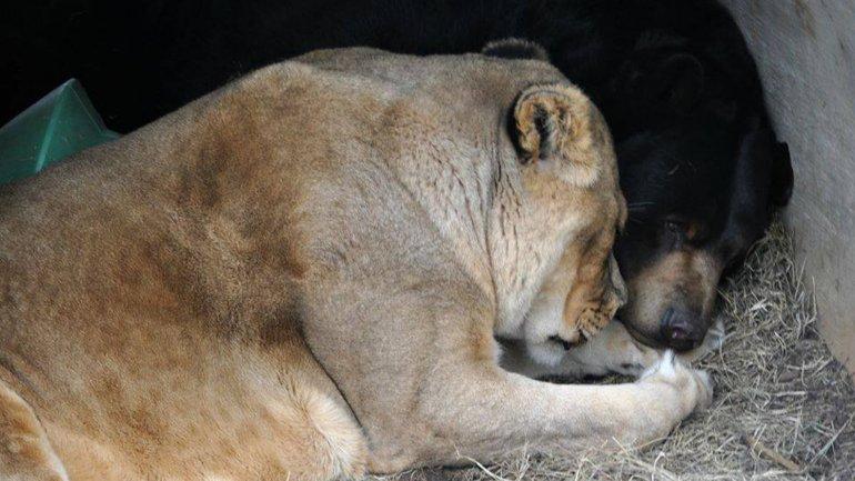 Leo y Baloo duermen uno al lado del otro