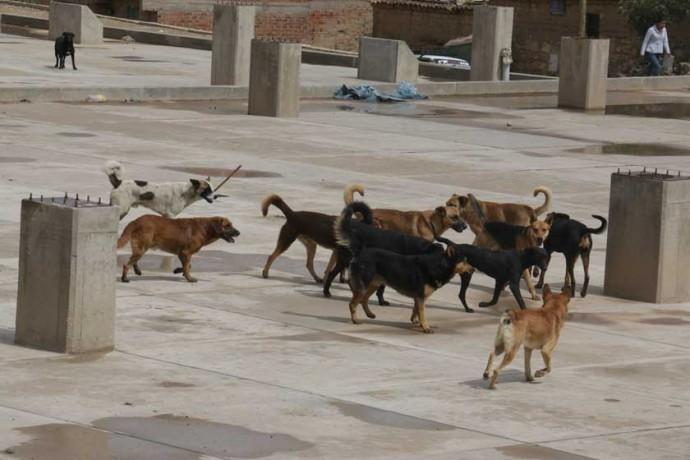PELIGRO. Jaurias de canes deambulan por las calles de Sucre, constituyéndose en un peligro para la población.