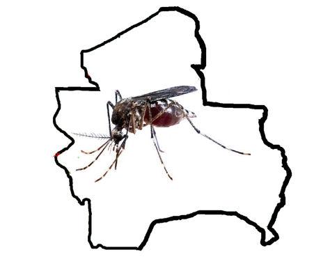 Zika en Santa Cruz
