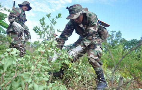 Efectivos antidroga en labores de erradicación de plantaciones de coca. Foto: Archivo