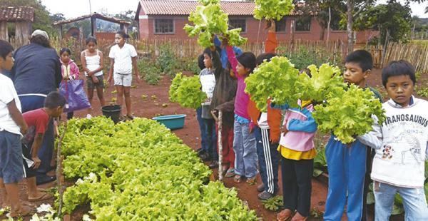 Los escolares de San Andrés de Sutuniquiña cosecharon verduras y hortalizas en el huerto de la escuela