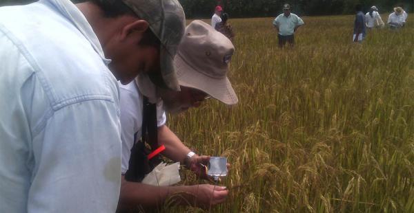 El Ministerio de Desarrollo Rural dotará de semillas para 2017