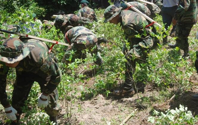 Gobierno ratifica que no habrá nuevas áreas de cultivos de coca y anuncia sanciones penales