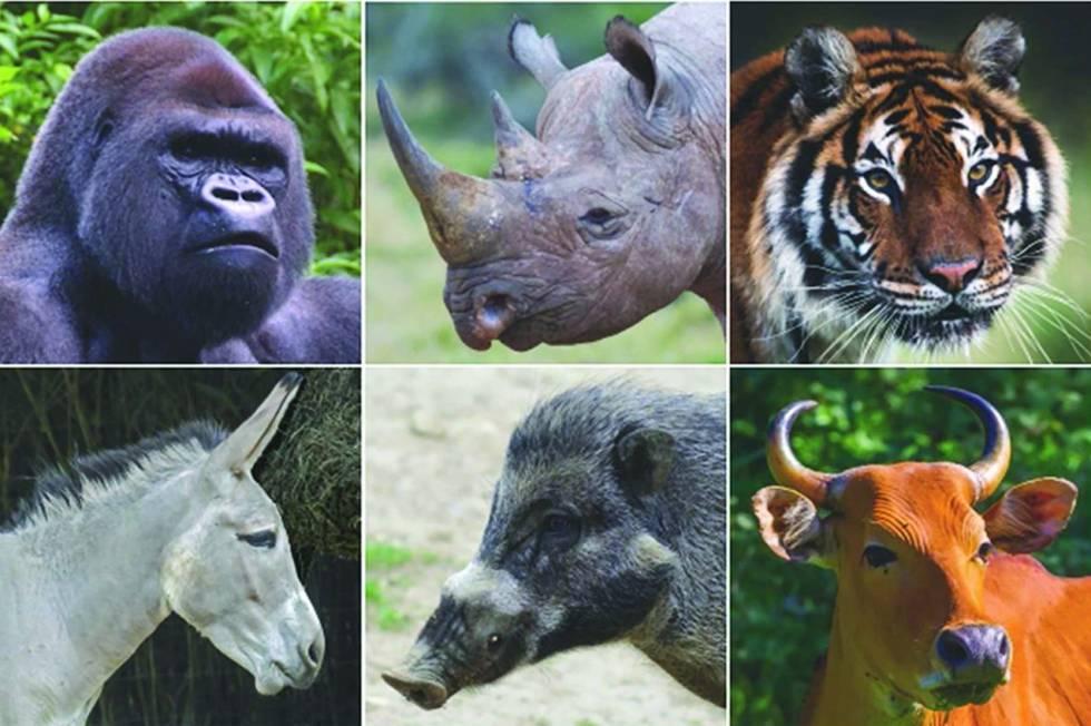 La Tierra podría quedarse sin sus grandes mamíferos.