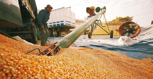 una situación que se repite los maiceros lamentan no contar con un sistema de acopio Los intermediarios aseguran que pagan los valores adecuados a los productores