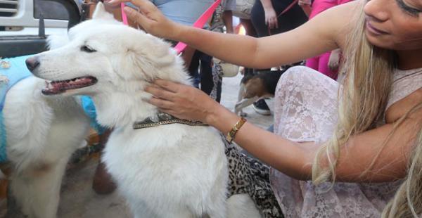 Las mascotas tuvieron un festejo adelantado en la ciudad de Santa Cruz