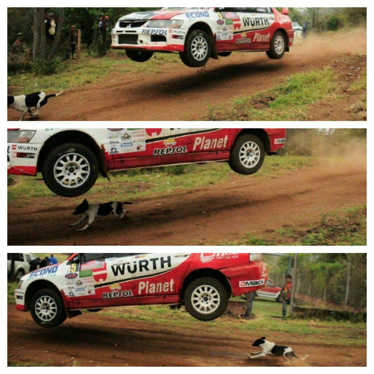 La suerte del perro en el Rally Codasur-SCZ 2016
