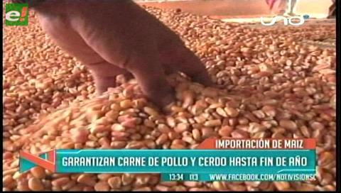 Avicultores y porcicultores duplicarán compra de maíz
