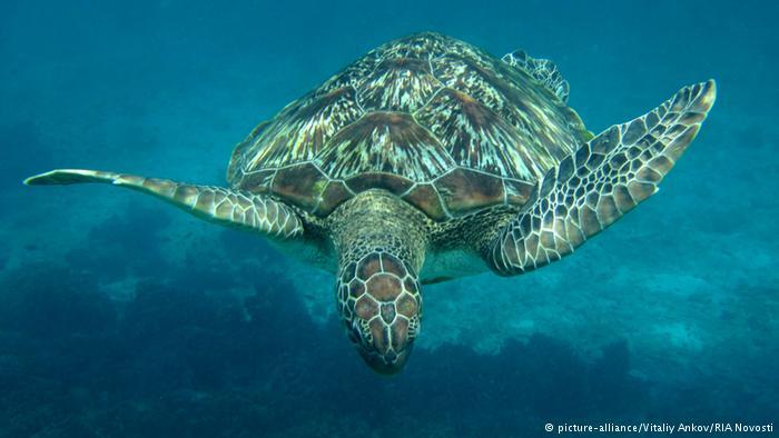Tortuga marina en el agua