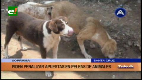 Soprama pedirá penalizar las apuestas en peleas de animales