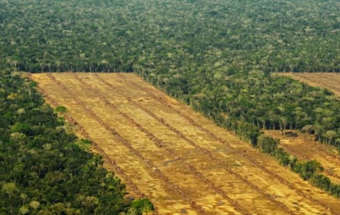 Denuncian deforestación de 700 hectáreas de bosque para plantar caña destinada a San Buenaventura