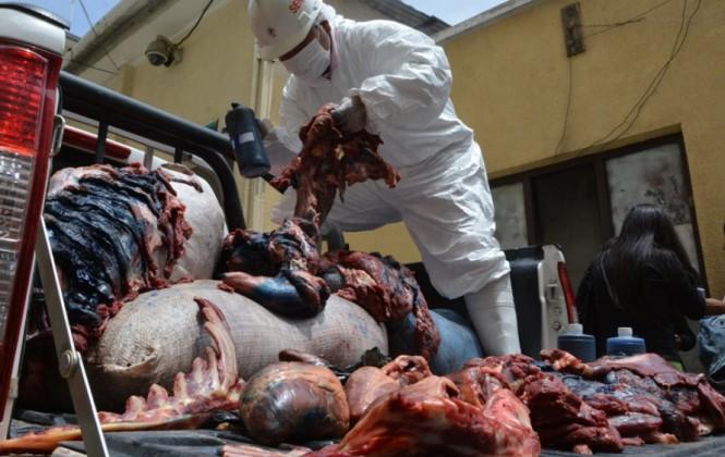 Senasag decomisa y destruye 1,8 toneladas de carne de burro