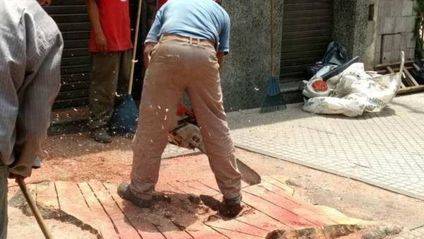 Un comerciante arrancó un árbol centenario en Rosario (Twitter)