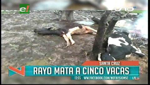 Un rayo mata a cinco vacas en Buena Vista