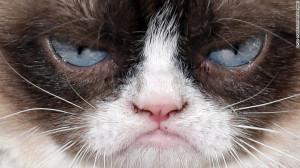 Grumpy Cat, también conocida como Tardar Sauce, es quizás la gata más conocida de internet. Celebridades como Anderson Cooper y Jennifer López se han fotografiado con esta minina.