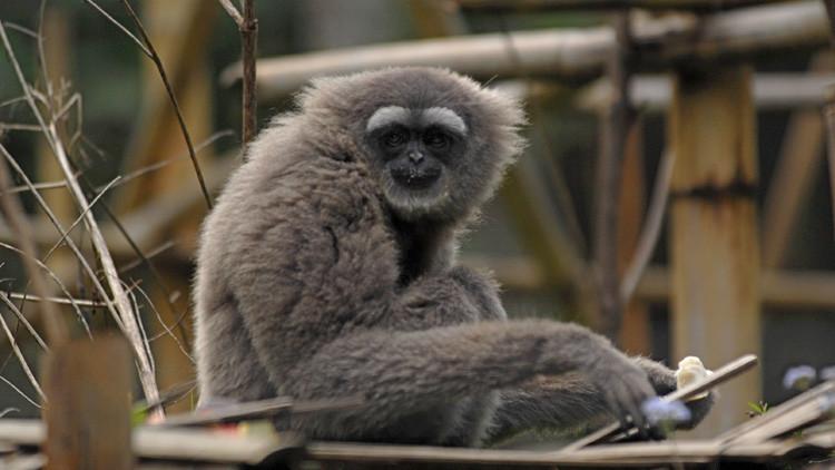 Una nueva especie de primate recibe el nombre del protagonista de