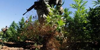 México importa de EE.UU. derivado medicinal de marihuana pero continúa guerra contra la droga
