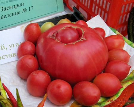 Syzran Tomato From Festival