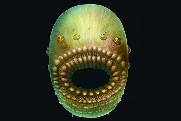 El animal más antiguo en el camino evolutivo que lleva a los humanos tenía cuerpo parecido a una bolsa y una boca muy grande.