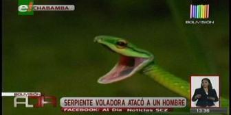 Serpiente voladora atacó a un hombre en Cochabamba