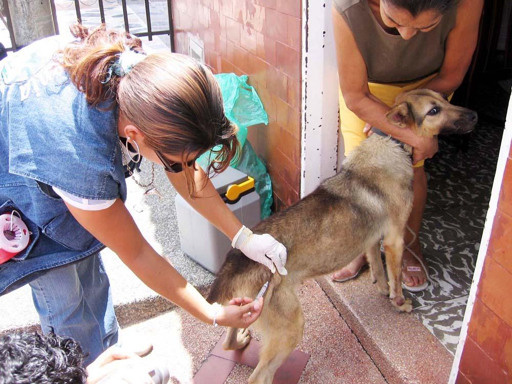 Resultado de imagen para vacunar a perros